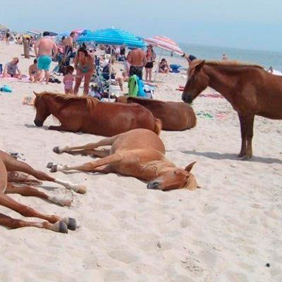 Isla-Assateague