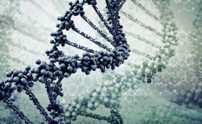 Ser-humano-pocos-genes