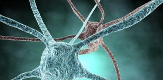 Neurona by juliendn
