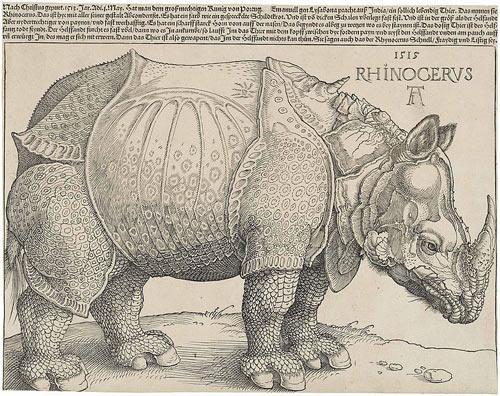 Rinoceronte Durero